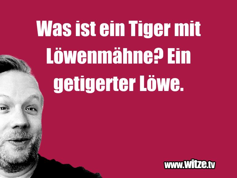 Leidenschaftlicher Humor... Was ist ein Tiger mit Löwenmähne? Ein getigerter L…
