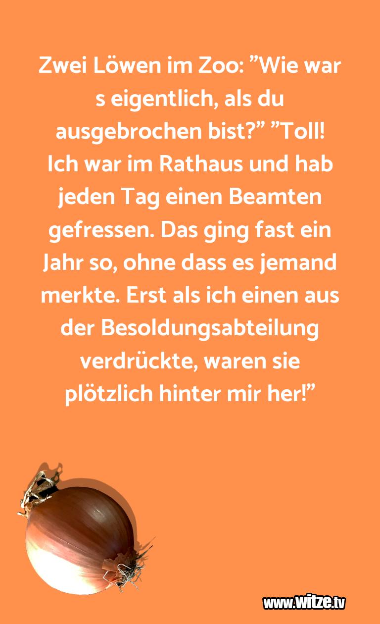 """Ein Wortwitz über… Zwei Löwen im Zoo: """"Wie war s eigentlich, als du a…"""