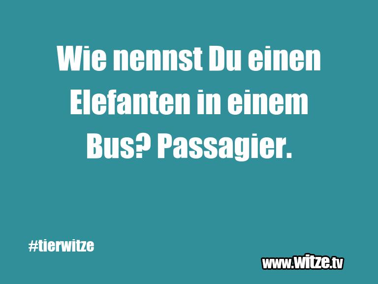 Ein Wortwitz über… Wie nennst Du einen Elefanten in einem Bus? Passag…