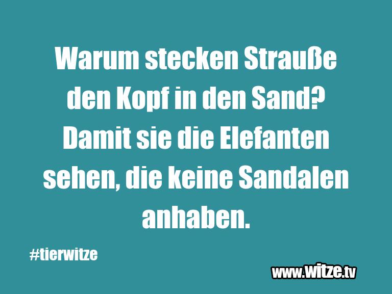 Nur Unsinn… Warum stecken Strauße den Kopf in den Sand? Damit …